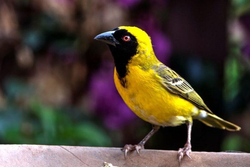Birding in Ocean Shores