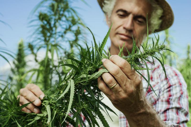 high-grade weed