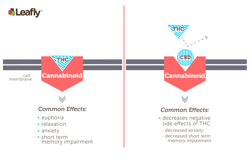 CBD-Benefits-Graphic-Leafly