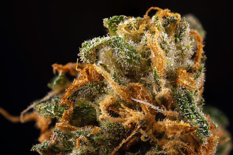 Top 10 Weed Strains Washington