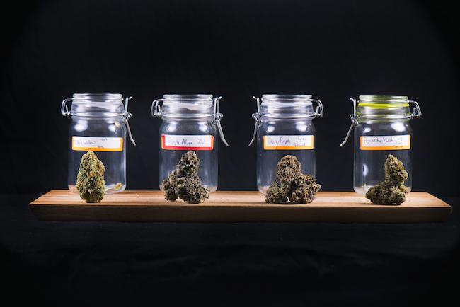 High THC Strains Durban Poison Kush