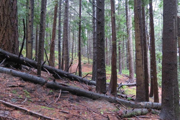 Things to Do Near Lake Forest Park Hamlin Park