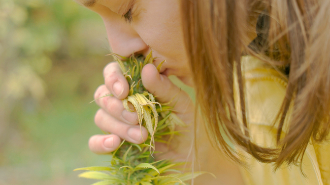 buying cannabis smelling flower
