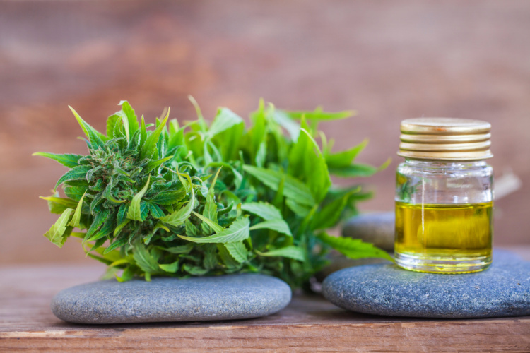 Know About CBD - cannabis and CBD oil on rocks