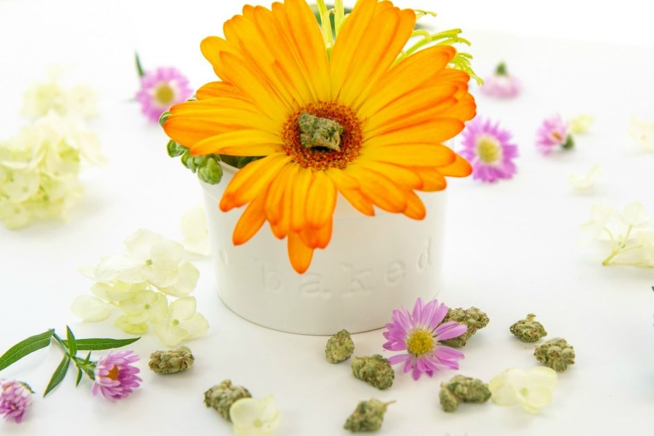 Best Cannabis Strains for Spring