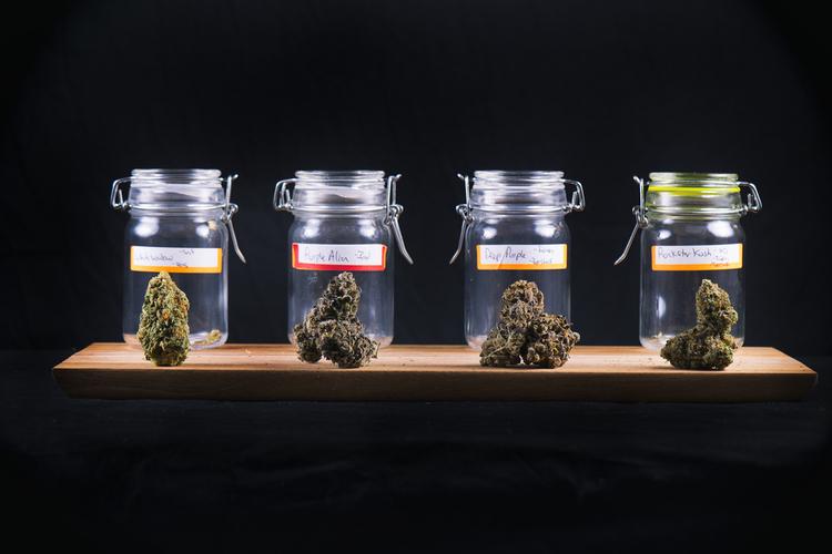 Breeding cannabis jars