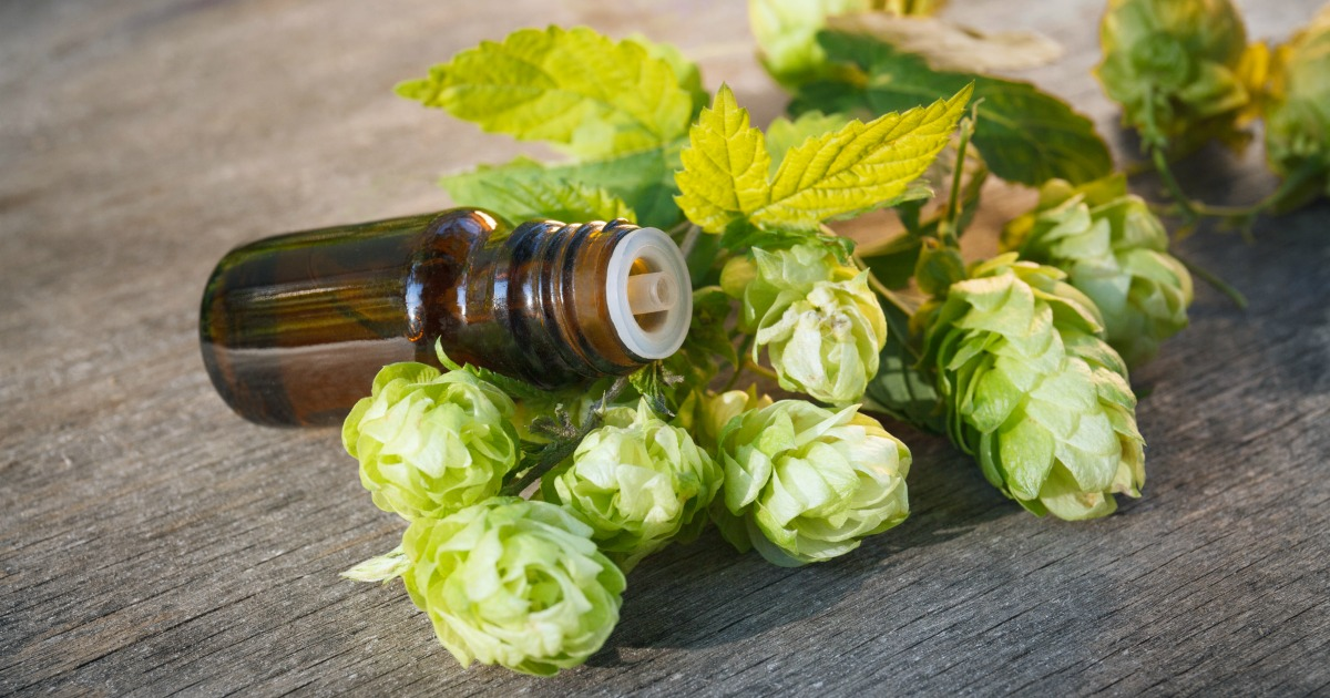 All About Humulene, the Terpene That Links Cannabis and Beer