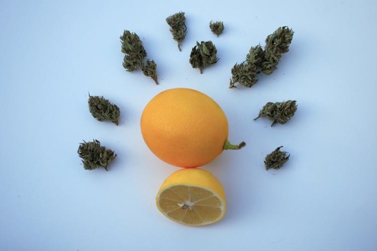 Limonene lemon and bud