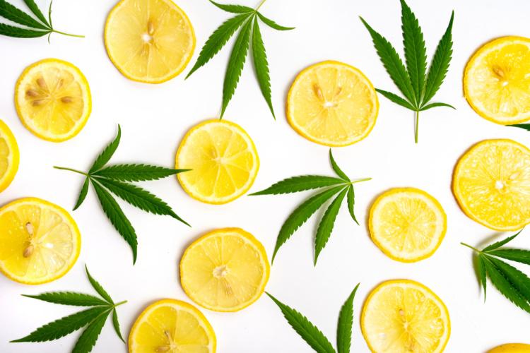 Limonene lemon slices