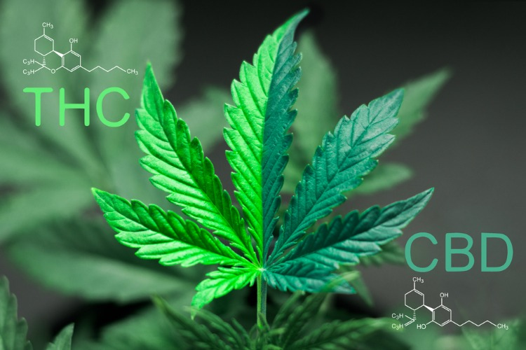 Does CBD Oil Get You High molecules
