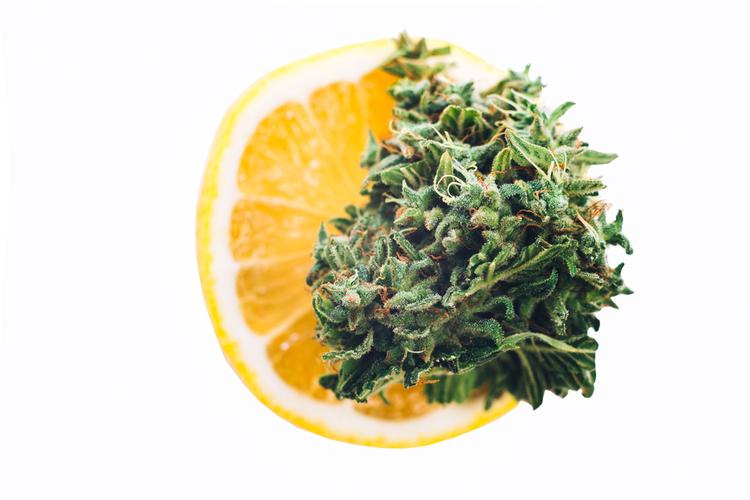 indica vs sativa vs hybrid limonene