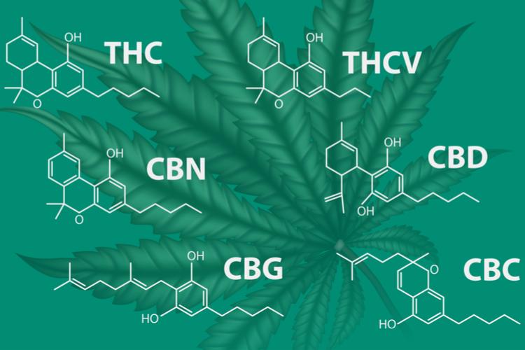 indiva vs sativa vs hybrid cannabinoids