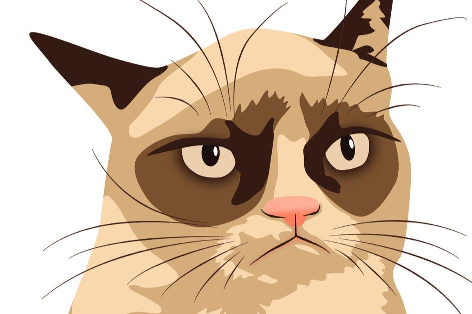 CBD oil memes grumpy cat