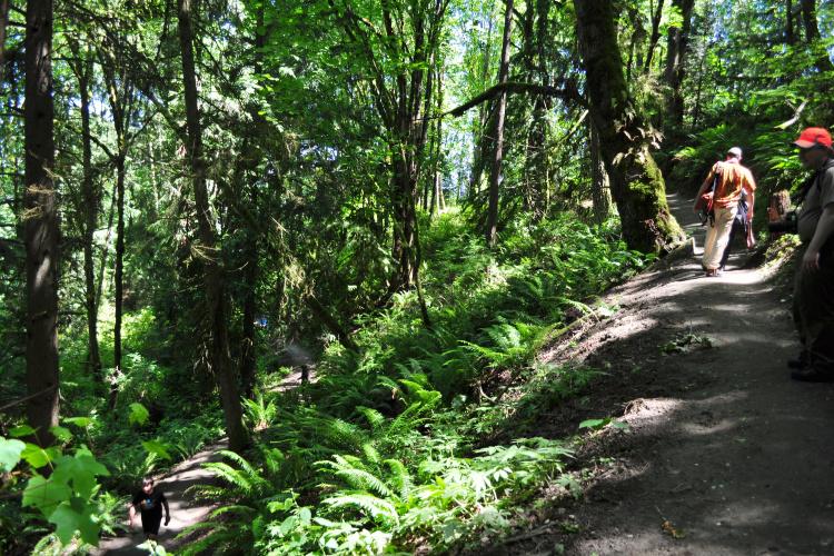 Hiking in Washington: Evans Creek Preserve