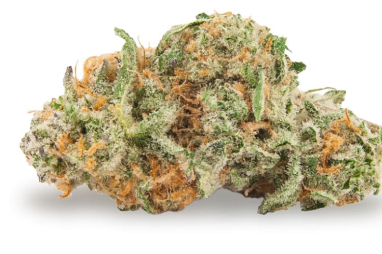 fruity cannabis strains Magnum PI by Treehawk Farms