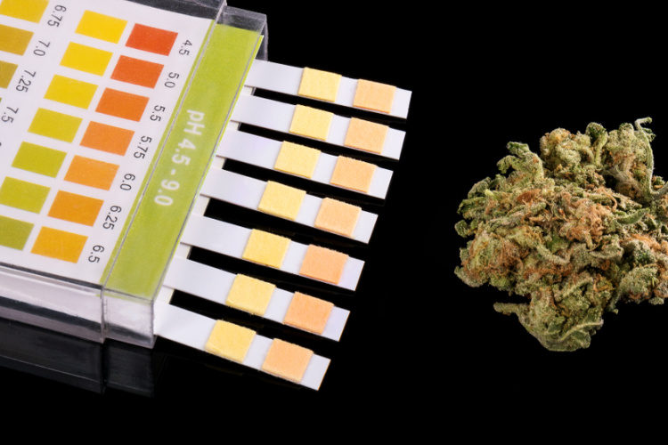 How long does THC stay in your system 2