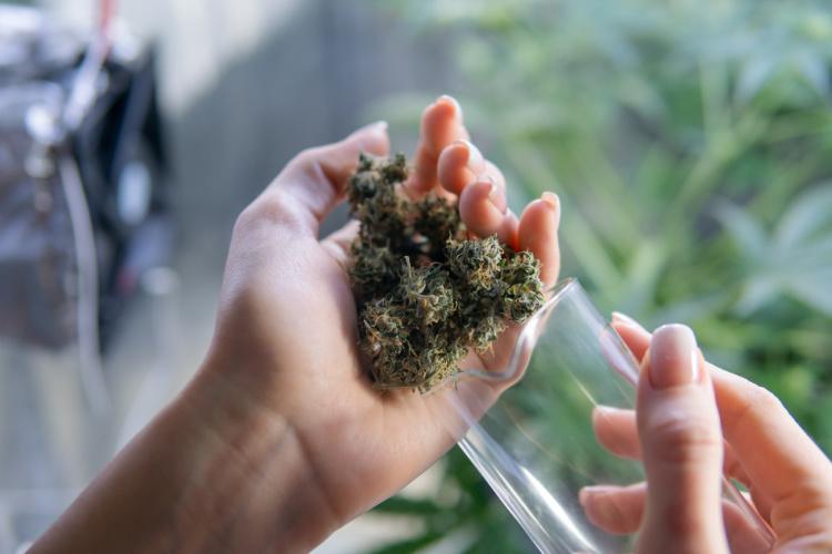 cannabis shelf life 1