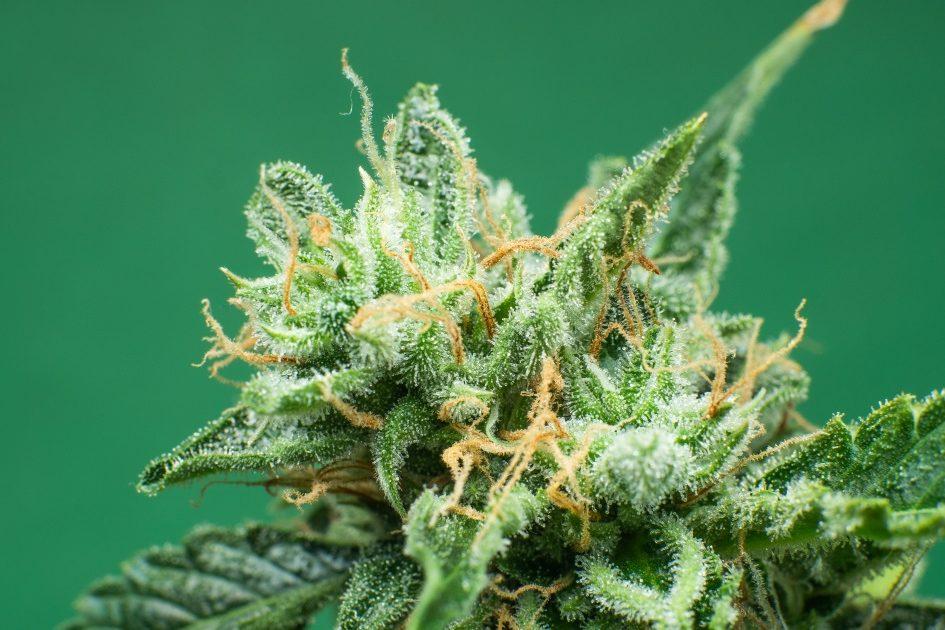 Best indica strains