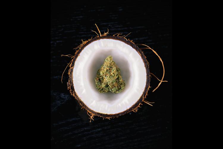 Cannabis Coconut Oil 1