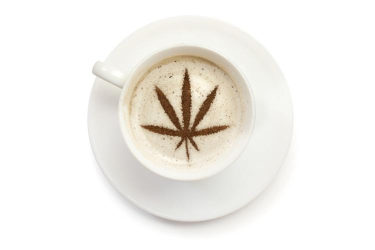 Cannabis Coconut Oil 3