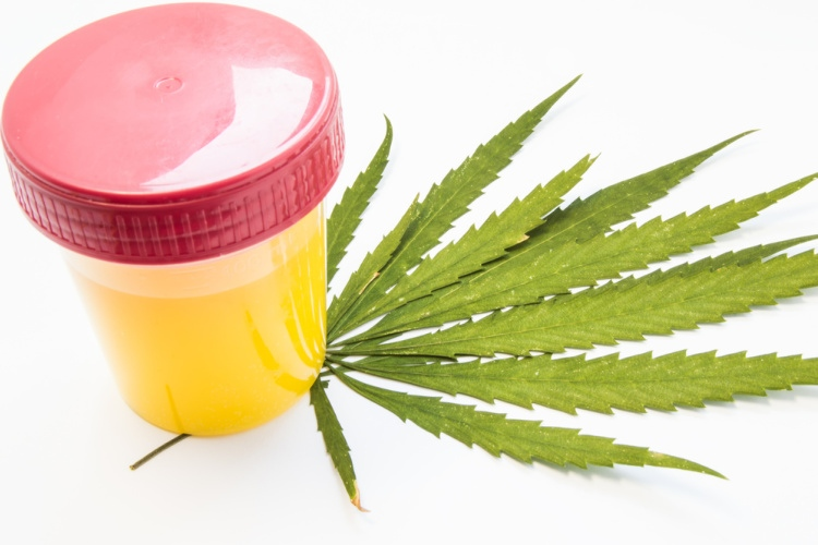 How Long Does CBD Stay in Your System 2