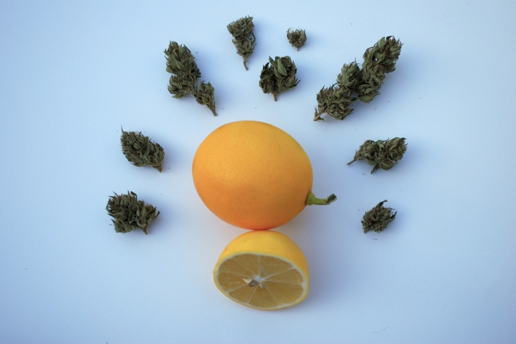 Lemon Kush 1