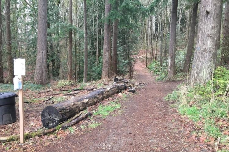 Seattle hiking 3