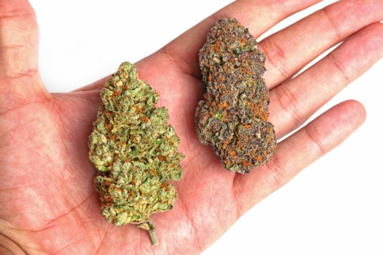 How to choose a cannabis strain 1