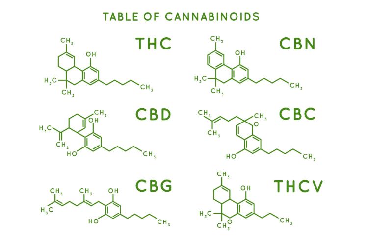 How to choose a cannabis strain 2