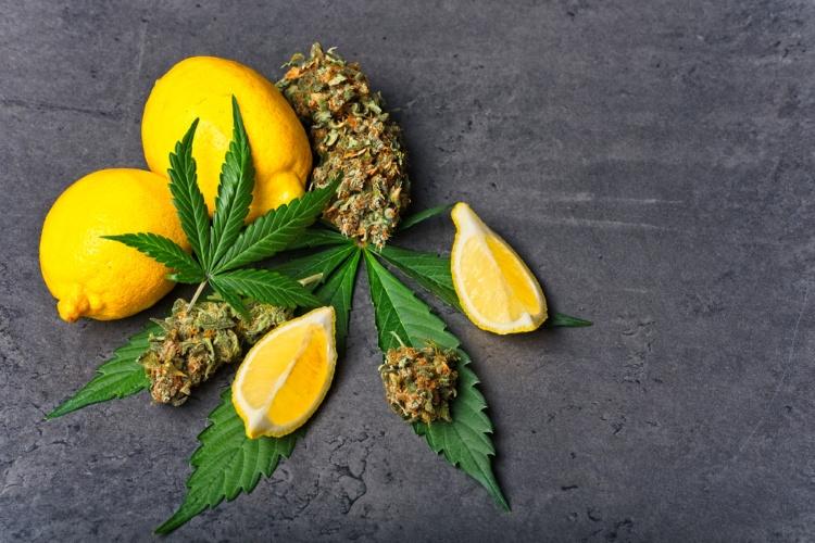 How to choose a cannabis strain 3