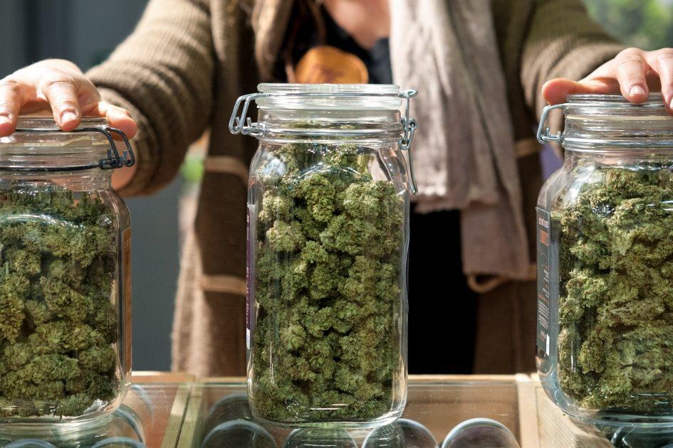 How to choose a cannabis strain